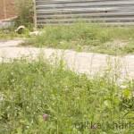 Дорожка во дворе из плитки «Старый город» с бордюром