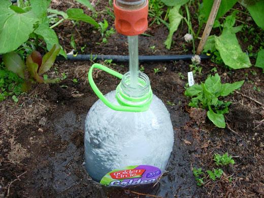 Высадка рассады помидор в теплицу с бутылками для полива