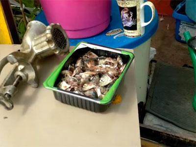 Прокрутите рыбные отходы через мясорубку