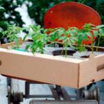 Когда сеять рассаду огурцов, перцев и помидор для теплицы