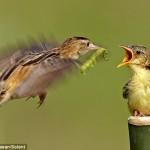 Последнее, что видит в своей жизни гусеница - большой желтый рот